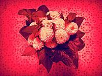 Bouquet of dahlias.