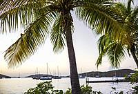 British Virgin Islands, Virgin Gorda, The Bitter End, palm trees, sunset.