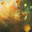 Beautiful seasonal backgrounds with fallen leaves against blurred natural landscape.