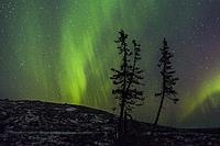 Northern light, Aurora borealis seen from Mount Dundret, some spruce trees in the foreground and little snow on the ground, Gällivare, Swedish Lapland...
