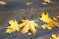 Seattle, Washington: Fallen maple leaves on a stairway in Volunteer Park.