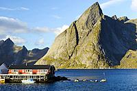 Fishing village of Hamnøya - Reine, Moskenesøya island, Lofoten archipelago, county of Nordland, Norway, Europe.