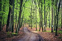 Forest road on Wolin Island, West Pomeranian Voivodeship of Poland.