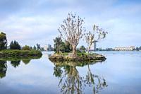 Cormorants nesting on a tree , Bird island , Lake Merritt, Oakland , California , USA.