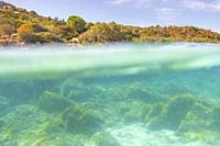 Half underwater photo with the sea bed and trees in arinella (Olbia), Olbia-Tempio province, Sardinia district, Italy.