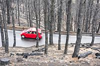 A car drives on a mountain road a few days after huge forest fire in the mountain pine forests on Gran Canaria, Canary Islands, Spain.