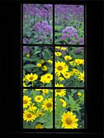 View through a window onto a colourful flower bed in summer.