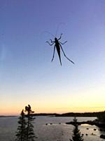 A small grasshopper in the sky overlooking the ocean at sunset, Nova Scotia, Canada.