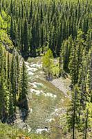 Canada, Alberta. Overhead view of fresh water river running down through forested valley in the Rocky Mountains, southeast of Calgary.