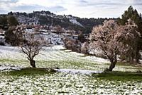 Snow in Valderrobres. Teruel province, Aragón, Spain.