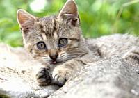 Closeup of a Kittens Lying Outdoors.