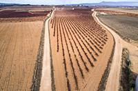Aerial view of vineyards. Alpera. Albacete Province. Spain
