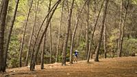 A woman hiker, 65, takes a photo in the forest near Frigiliana, Malaga province, Spain.