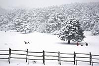Snowfall in Sierra de Guadarrama. Puerto de Cotos (Cotos Mountain Pass), Madrid Province, Spain