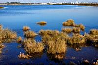Estuary of Alvor river - Ria de Alvor and Odiaxere river, staging post for thousands of migrating birds, estuarine ecosystem is rich in numerous anima...