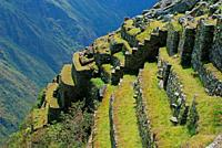 Andenes, agricultural fields, Machu Picchu,Los Andes and Urubamba or Vilcanota river canyon, Llaqtapata inca city, World Heritage, XVth century,Aguas ...