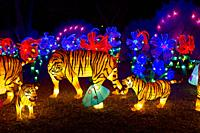 Chinese Lantern Festival to celebrate the Chinese New Year Tiger lantern.