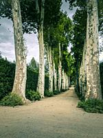 Alley in Boboli Gardens, Florence, Italy.