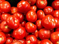 Red tomatoes background. Group of tomatoes . Background for market .