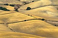 Landscape near Vejer de la Frontera, Cadiz province, Spain.