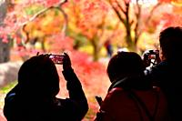Tourists taking pictures of bright red autumn Japanese gardens at Tofukuji temple in Kyoto, Japan.