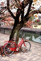 Red womens city bicycle parked at a cherry tree by a river in autumn on a street of Kyoto, Japan.