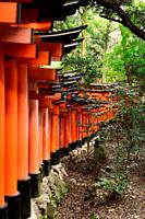 A long row of orange Torii gates at Fushimi Inari Taisha head shrine in Kyoto, Japan.