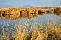 Great Salt Lake marsh, Bear River Migratory Bird Refuge, Utah.