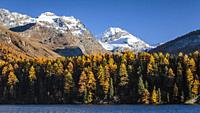 Swiss alps mountains with larch trees in the autumn season near the Julier Pass, Switzerland, Europe.
