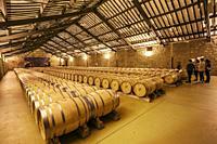 CVNE Winery. Haro. La Rioja. Spain