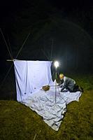 Scientific studies on butterfly MARIPOSA ISABELINA - SPANISH MOON MOTH Spanish (Graellsia isabellae), The Ports Natural Park, Terres de L'Ebre, Tarrag...