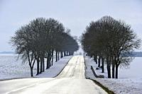 tree-lined country road through the Beauce region covered with snow, department of Eure-et-Loir, Centre-Val-de-Loire region, France, Europe.