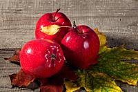 Red apples with maple leaves. Autumn yellow and maroon leaves on a wooden table.