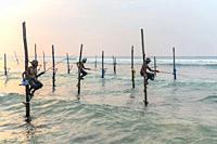 Stilt Fishermen, Ahangama, Mirissa, Sri Lanka, Asia.