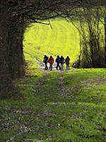 group of people in a tree tunnel near Iffour, Lot-et-Garonne Department, Aquitaine, France.