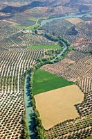 aerial view olive fields and Genil river Andalucia, Spain Europe