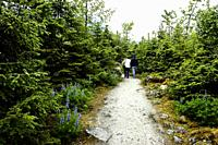 Couple walking along lupine-lined trail in Alaska's Mendenhall Glacier Park.