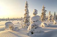 Winter landscape in clear blue sky with snowy trees, Gällivare county, Swedish Lapland, Sweden.