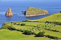 Graciosa Nature Park, Graciosa island. Azores. Portugal.