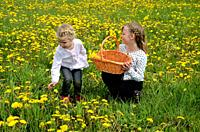 Two girls, 9 and 4 years old, in a field with dandelion, Ystad, Sweden, Europe.