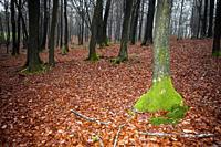 Traumatic forest.