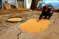 Old man drying corn, Yunnan province, China