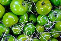 Green tomatoes, Borough Market, London, United Kingdom