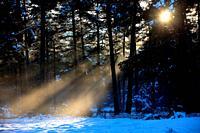 Snowy landscape, Prealpes d'Azur regional park, Alpes Maritimes, 06, PACA, France