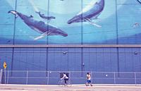 """""""""""Heavenly Waters"""" mural, Toronto, Ontario, Canada. . Painted on the side of the Redpath sugar factory as part of the whaling series by Wyland to ..."