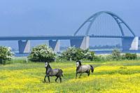 Fehmarnsund Bridge, Baltic Sea, Schleswig Holstein, Germany, Europe.