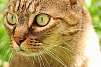 The feline look, Miajadas, Cáceres, Estremadura.