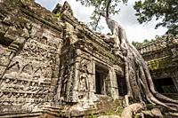 Giant roots tree covering ruins of Ta Prohm in Angkor compound (Siem Reap Province, Cambodia).