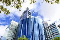 Tree framed skyscrapers of Perth CBD including BHP Billiton and Rio Tinto, Perth, Western Australia, Australia.