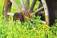 Impressionist are of wagon wheel and yellow flowers.